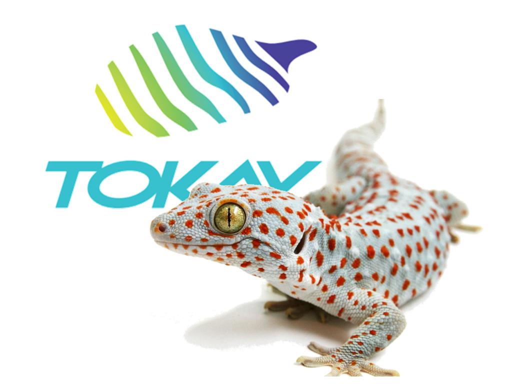 Les premiers pas de TOKAY